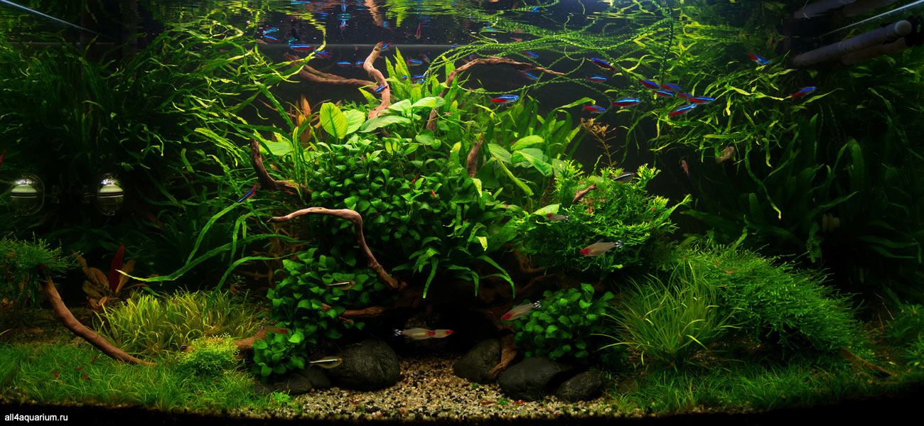 2016_kadr_aquascape_xl_16.jpg