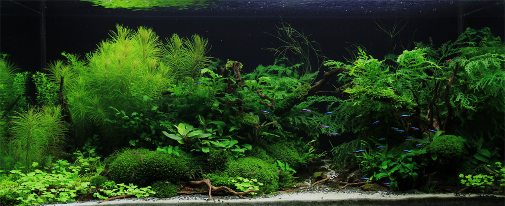 Planted Aquarium Contest Related Keywords & Suggestions - Planted ...