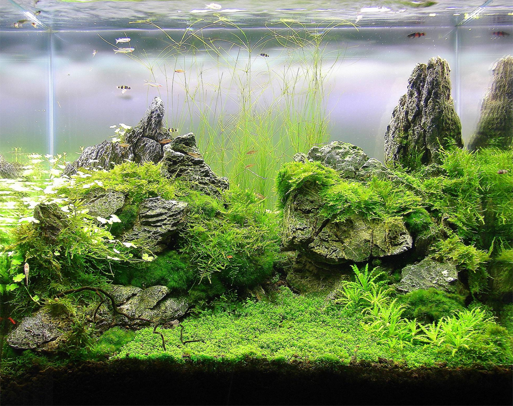 Planted aquarium design contest 2013 results of members for Plante aquarium