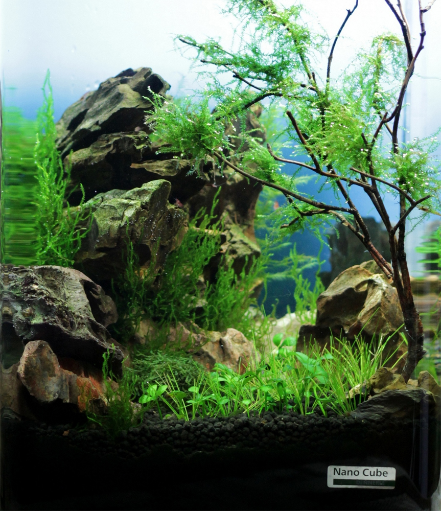 betta planted aquariums all about betta fish: planted aquarium with ...