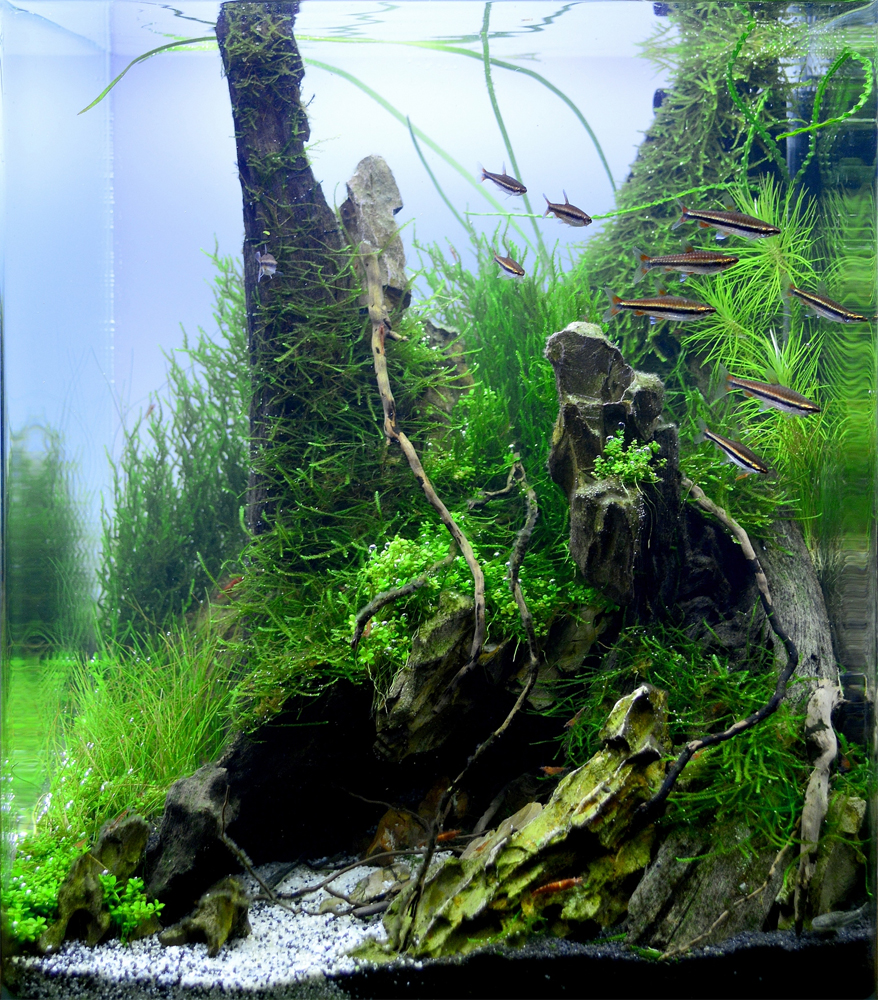 Aquascaping grifon quality test results dennerle nano cube contest 2013 - Aquascape espana ...