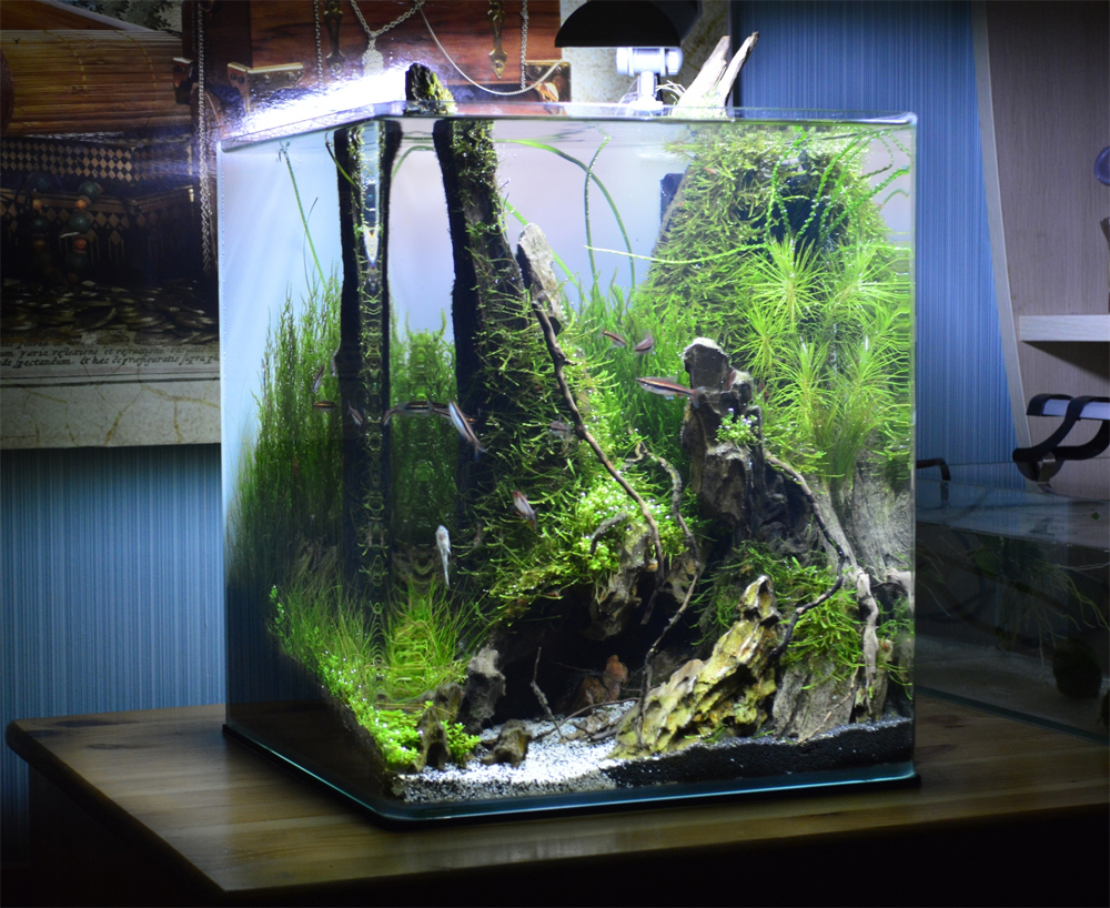 Aquascaping Grifon: Quality test Results DENNERLE Nano ...