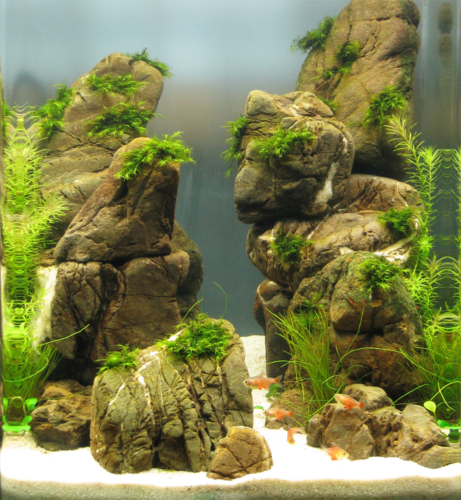 Aquascaping Grifon: Quality Test Results DENNERLE Nano