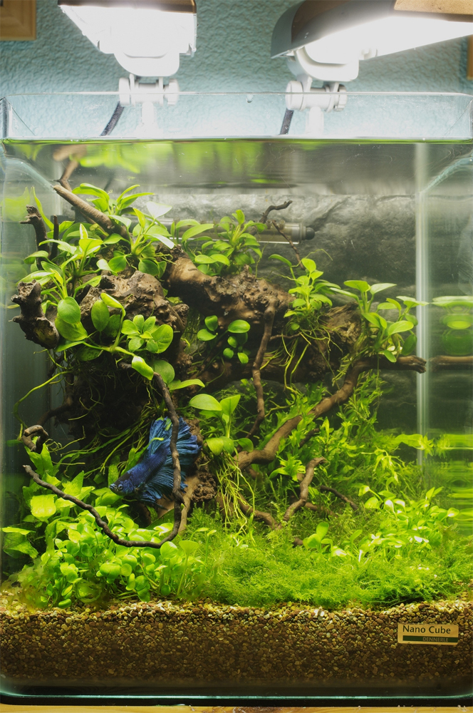 1000+ images about AQUASCAPING on Pinterest Marimo, Plants and Cubes