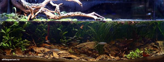 Biotope-aquarium-design-contest-2014-AO-