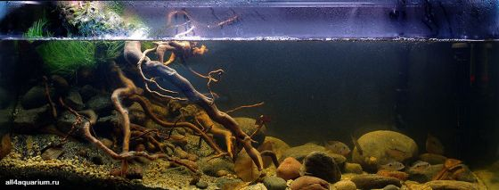 Biotope-aquarium-design-contest-2014-NA-