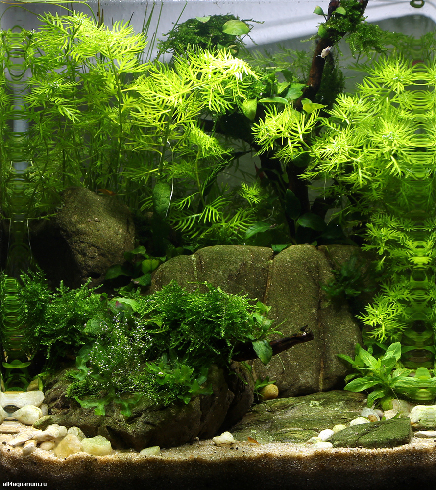 Results Of The 1st Stage Of The Scaper's Tank Contest 2014