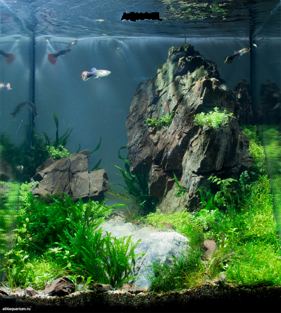 1000 images about aquascape on pinterest for Rocks for fish tank